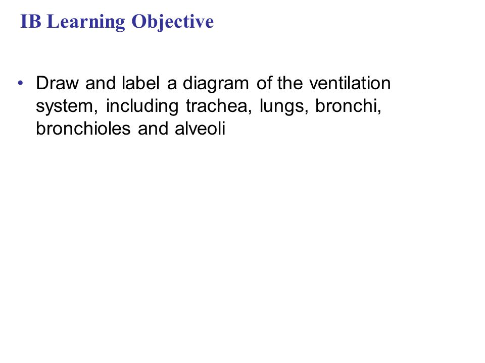 IB Learning Objective Draw and label a diagram of the ventilation system, including trachea, lungs, bronchi, bronchioles and alveoli