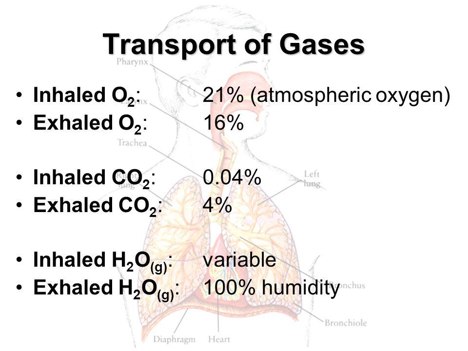 Transport of Gases Inhaled O 2 :21% (atmospheric oxygen) Exhaled O 2 :16% Inhaled CO 2 :0.04% Exhaled CO 2 :4% Inhaled H 2 O (g) :variable Exhaled H 2