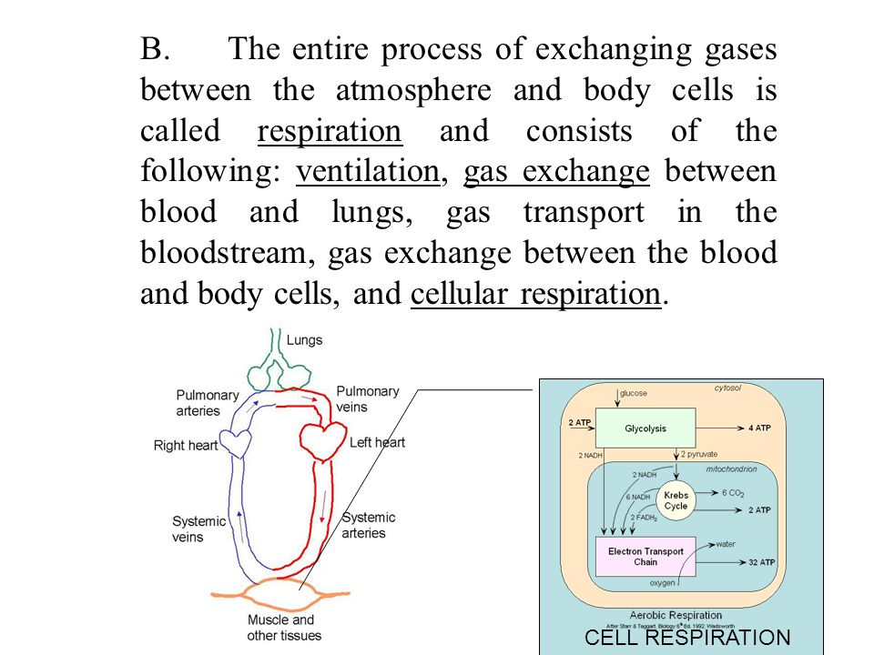 D.Diffusion across the Respiratory Membrane 1.Gases diffuse from areas of higher pressure to areas of lower pressure.