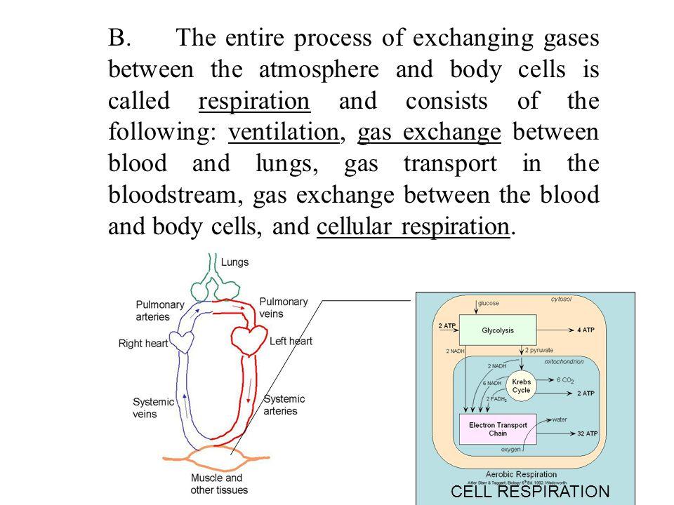 Oxyhemoglobin Oxygen loading occurs in lungs