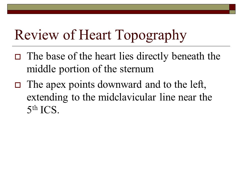 Review of Heart Topography  The base of the heart lies directly beneath the middle portion of the sternum  The apex points downward and to the left,