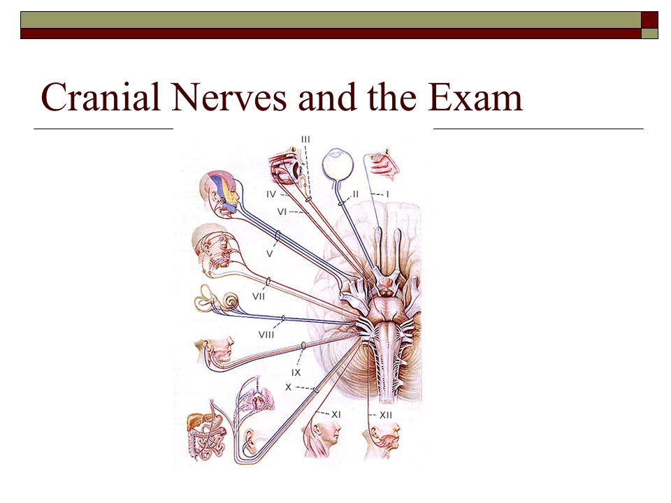 Cranial Nerves and the Exam