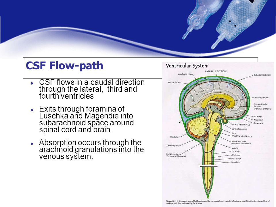 CSF Flow-path CSF flows in a caudal direction through the lateral, third and fourth ventricles Exits through foramina of Luschka and Magendie into sub