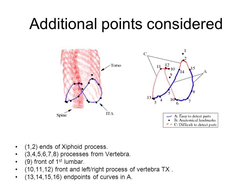 Additional points considered (1,2) ends of Xiphoid process. (3,4,5,6,7,8) processes from Vertebra. (9) front of 1 st lumbar. (10,11,12) front and left
