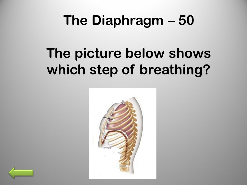 The Diaphragm – 50 The picture below shows which step of breathing