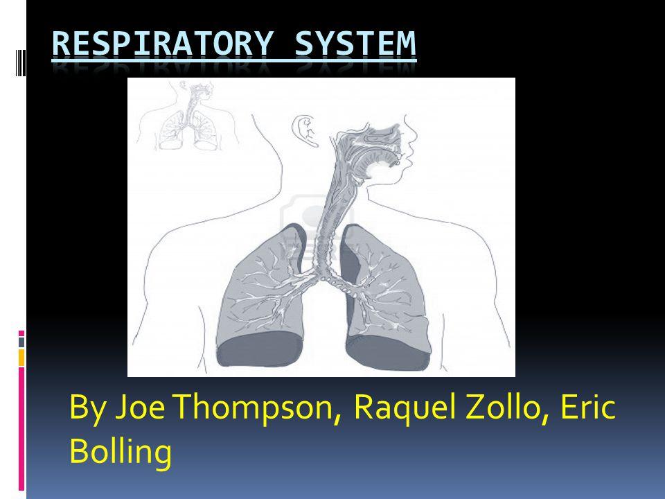 By Joe Thompson, Raquel Zollo, Eric Bolling