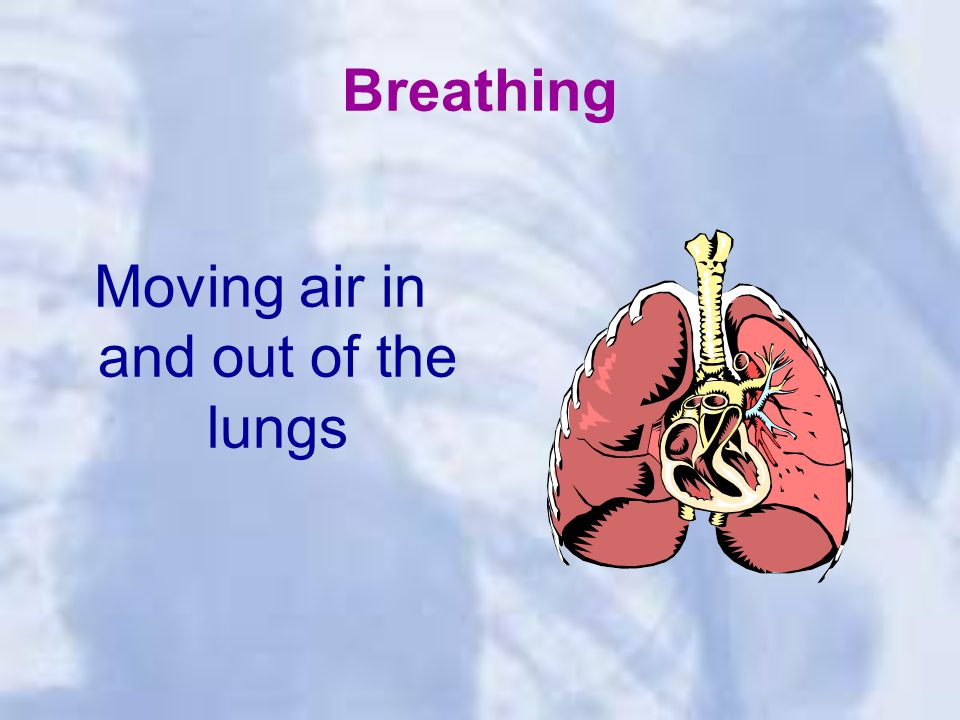 Breathing Moving air in and out of the lungs