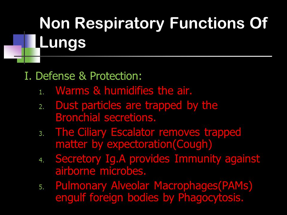 Non Respiratory Functions Of Lungs I.Defense & Protection: 1.