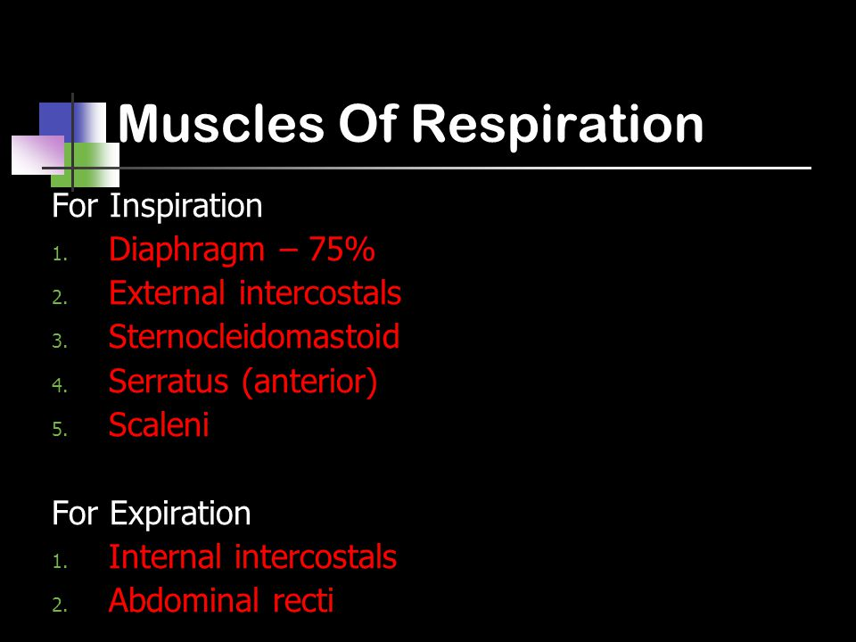 Muscles Of Respiration For Inspiration 1. Diaphragm – 75% 2. External intercostals 3. Sternocleidomastoid 4. Serratus (anterior) 5. Scaleni For Expira