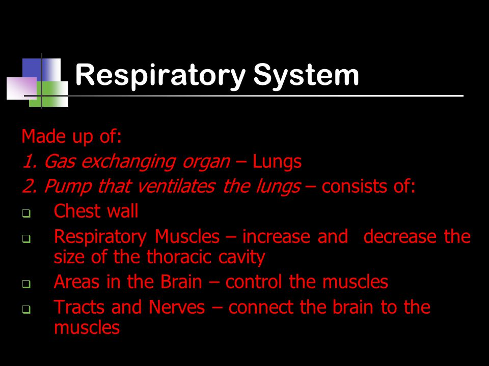 Respiratory System Made up of: 1. Gas exchanging organ – Lungs 2.