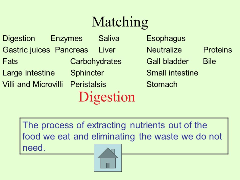 Matching Digestion EnzymesSaliva Esophagus Gastric juices PancreasLiver Neutralize Proteins Fats Carbohydrates Gall bladder Bile Large intestine Sphin