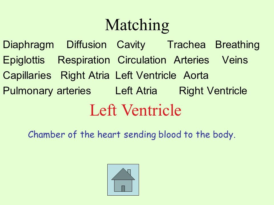 Matching Diaphragm Diffusion CavityTrachea Breathing EpiglottisRespiration Circulation ArteriesVeins Capillaries Right Atria Left Ventricle Aorta Pulmonary arteries Left Atria Right Ventricle Left Ventricle Chamber of the heart sending blood to the body.