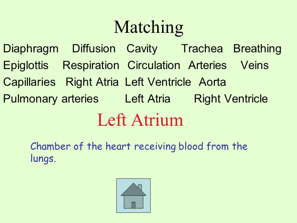 Matching Diaphragm Diffusion CavityTrachea Breathing EpiglottisRespiration Circulation ArteriesVeins Capillaries Right Atria Left Ventricle Aorta Pulmonary arteries Left Atria Right Ventricle Left Atrium Chamber of the heart receiving blood from the lungs.