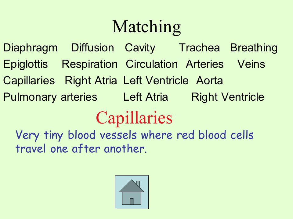 Matching Diaphragm Diffusion CavityTrachea Breathing EpiglottisRespiration Circulation ArteriesVeins Capillaries Right Atria Left Ventricle Aorta Pulm