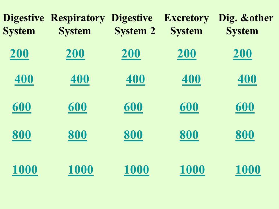 Digestive Respiratory Digestive Excretory Dig.