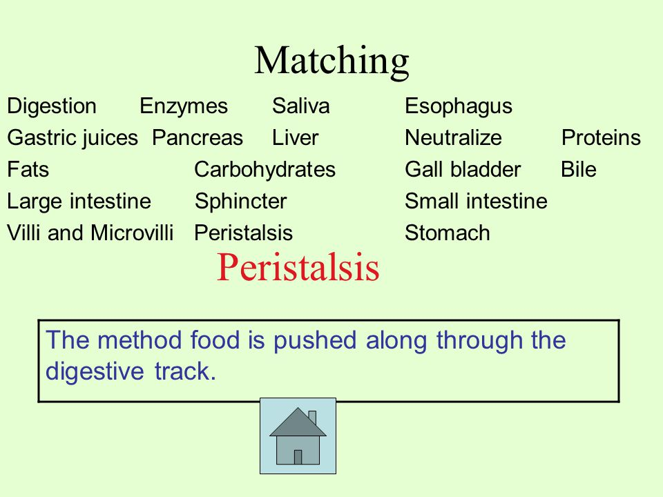 Matching Digestion EnzymesSaliva Esophagus Gastric juices PancreasLiver Neutralize Proteins Fats Carbohydrates Gall bladder Bile Large intestine SphincterSmall intestine Villi and Microvilli PeristalsisStomach Peristalsis The method food is pushed along through the digestive track.