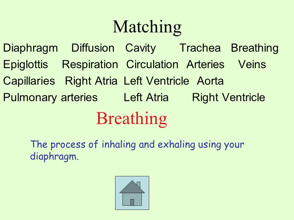Matching Diaphragm Diffusion CavityTrachea Breathing EpiglottisRespiration Circulation ArteriesVeins Capillaries Right Atria Left Ventricle Aorta Pulmonary arteries Left Atria Right Ventricle Breathing The process of inhaling and exhaling using your diaphragm.