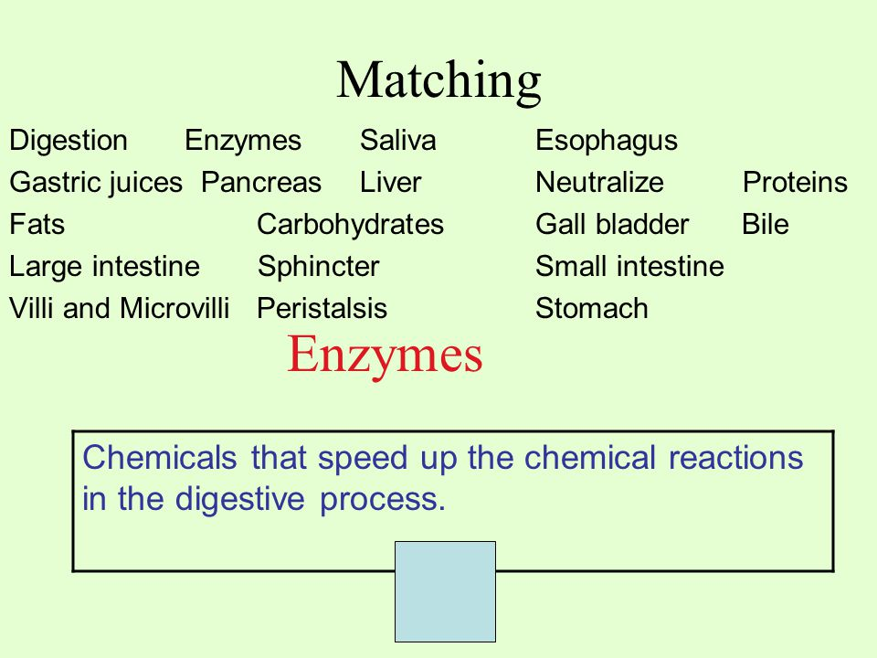 Matching Digestion EnzymesSaliva Esophagus Gastric juices PancreasLiver Neutralize Proteins Fats Carbohydrates Gall bladder Bile Large intestine SphincterSmall intestine Villi and Microvilli PeristalsisStomach Enzymes Chemicals that speed up the chemical reactions in the digestive process.