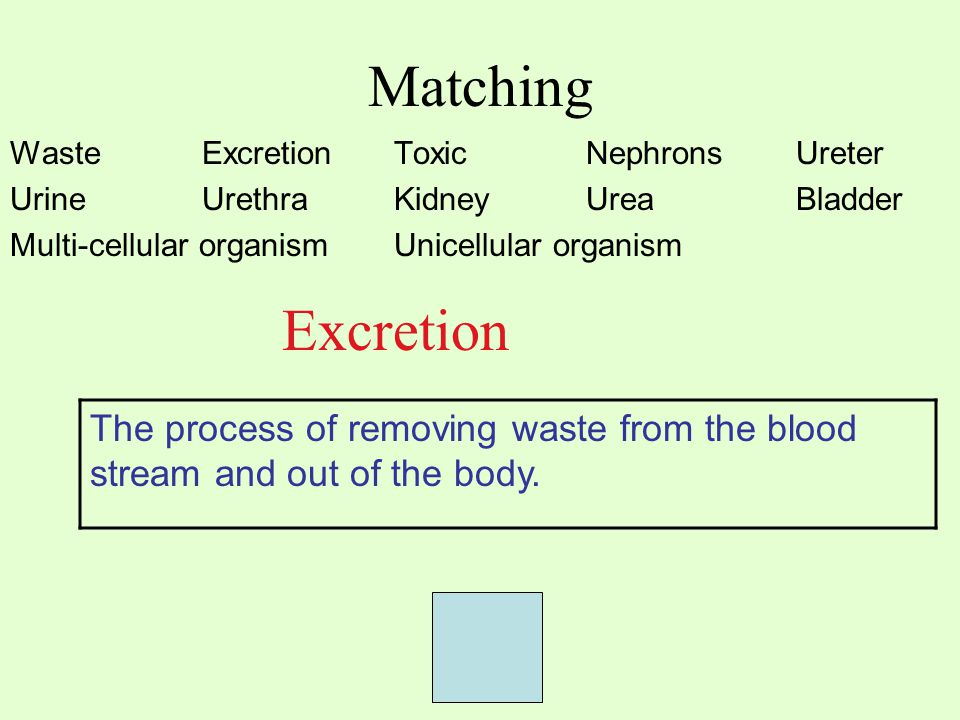 Matching Waste ExcretionToxic Nephrons Ureter UrineUrethraKidneyUrea Bladder Multi-cellular organismUnicellular organism Excretion The process of removing waste from the blood stream and out of the body.