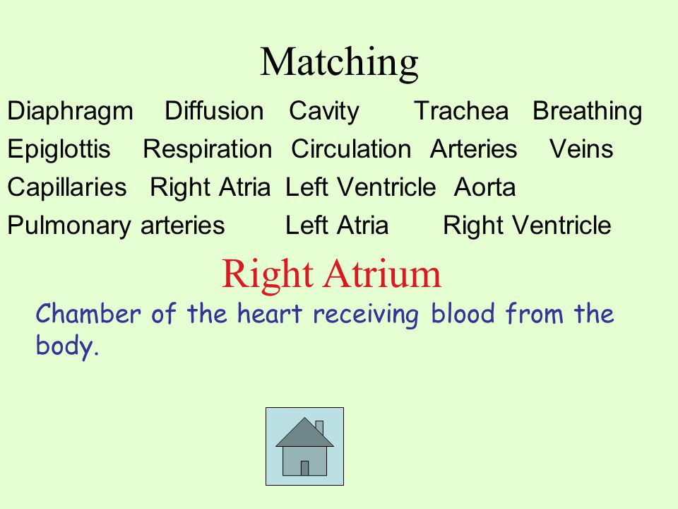 Matching Diaphragm Diffusion CavityTrachea Breathing EpiglottisRespiration Circulation ArteriesVeins Capillaries Right Atria Left Ventricle Aorta Pulmonary arteries Left Atria Right Ventricle Chamber of the heart receiving blood from the body.