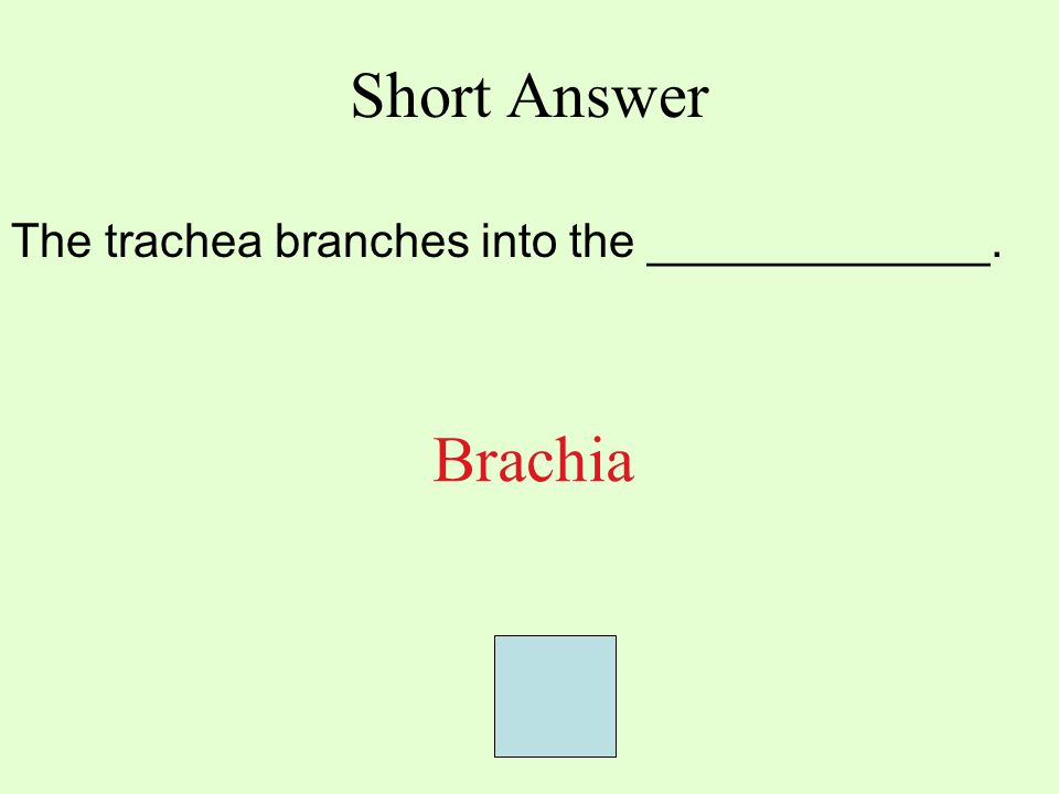 Short Answer The trachea branches into the _____________. Brachia