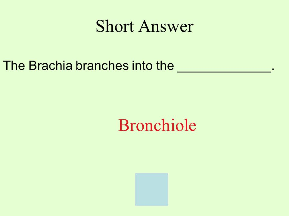 Short Answer The Brachia branches into the _____________. Bronchiole