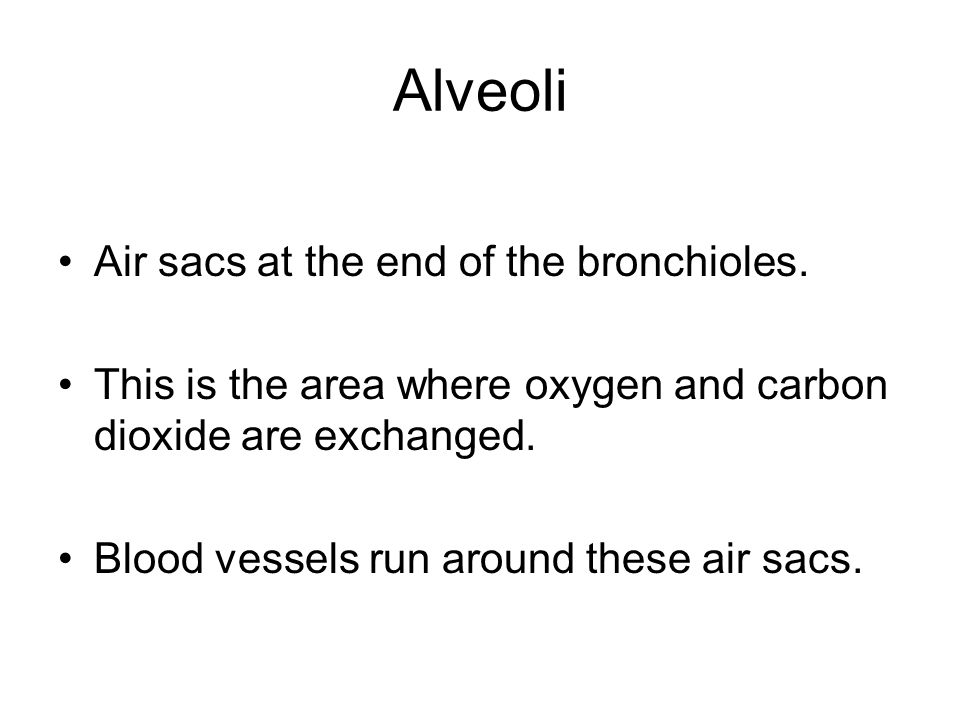 Alveoli Air sacs at the end of the bronchioles. This is the area where oxygen and carbon dioxide are exchanged. Blood vessels run around these air sac