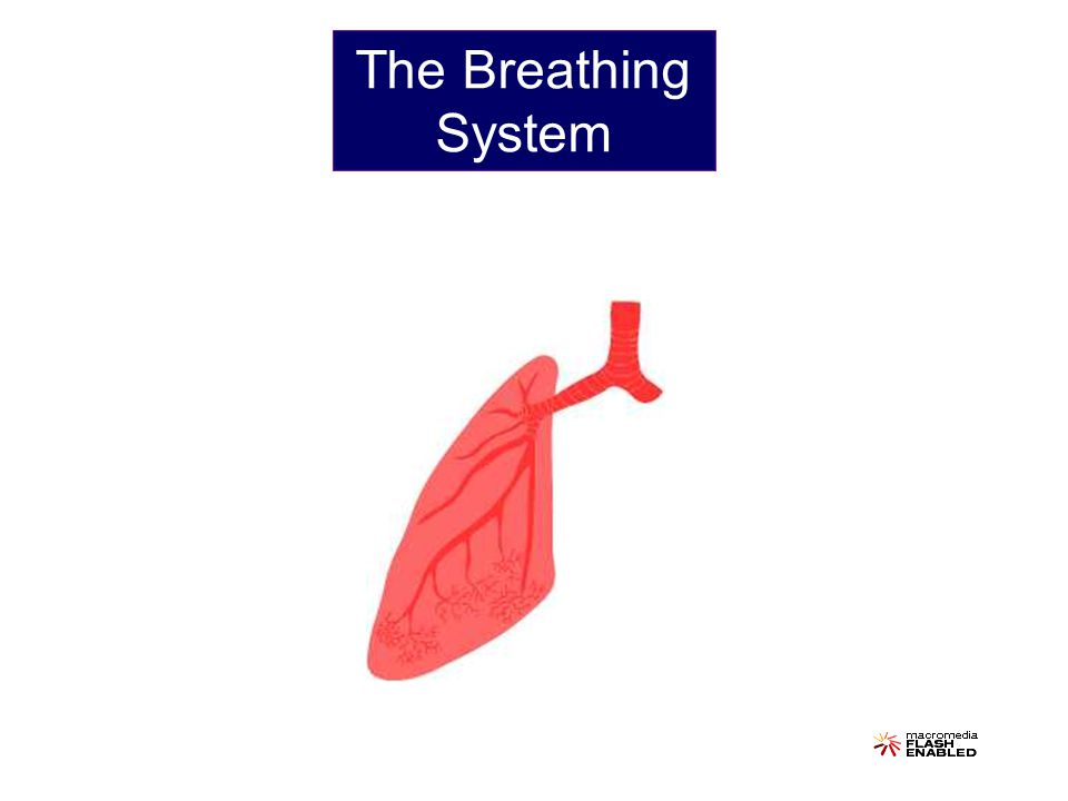 Oxygen (O 2 ) Carbon Dioxide (CO 2 ) Humans breathe to ensure that oxygen enters the body and that carbon dioxide leaves the body.
