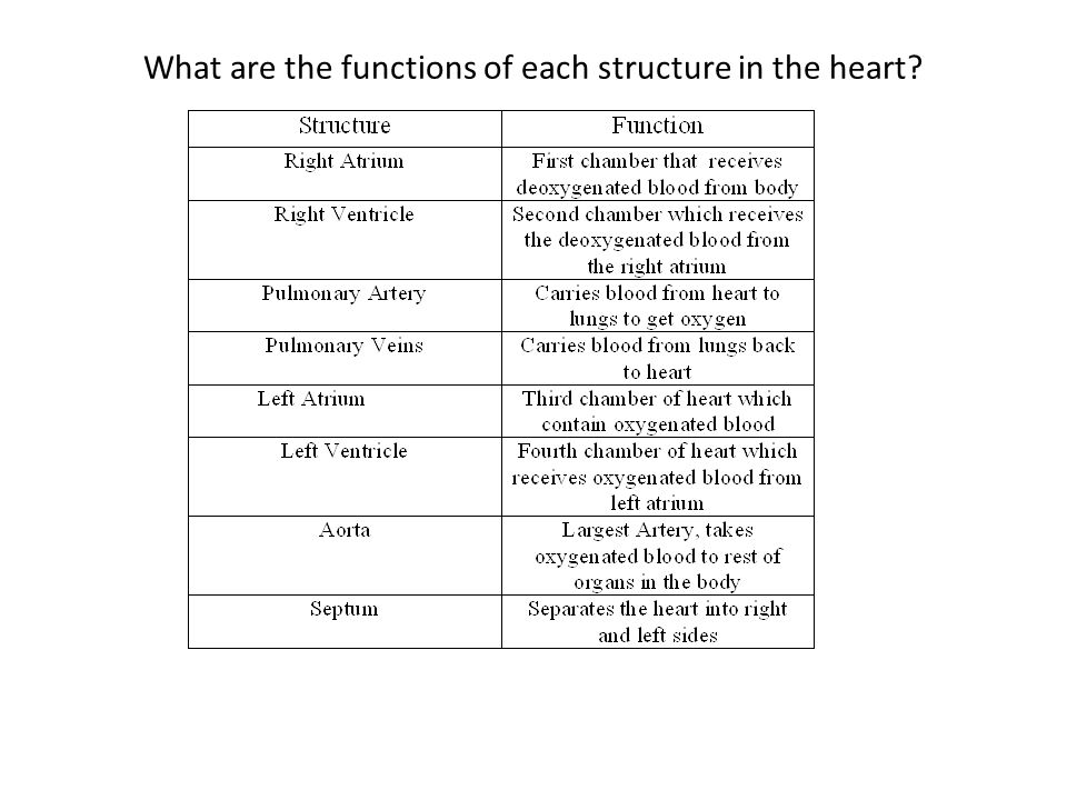 What are the functions of each structure in the heart
