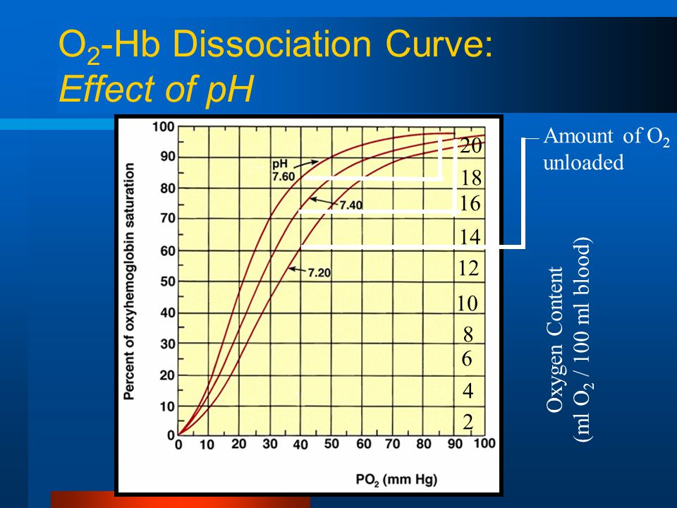 O 2 -Hb Dissociation Curve: Effect of pH 20 18 16 14 12 10 8 6 4 2 Oxygen Content (ml O 2 / 100 ml blood) Amount of O 2 unloaded