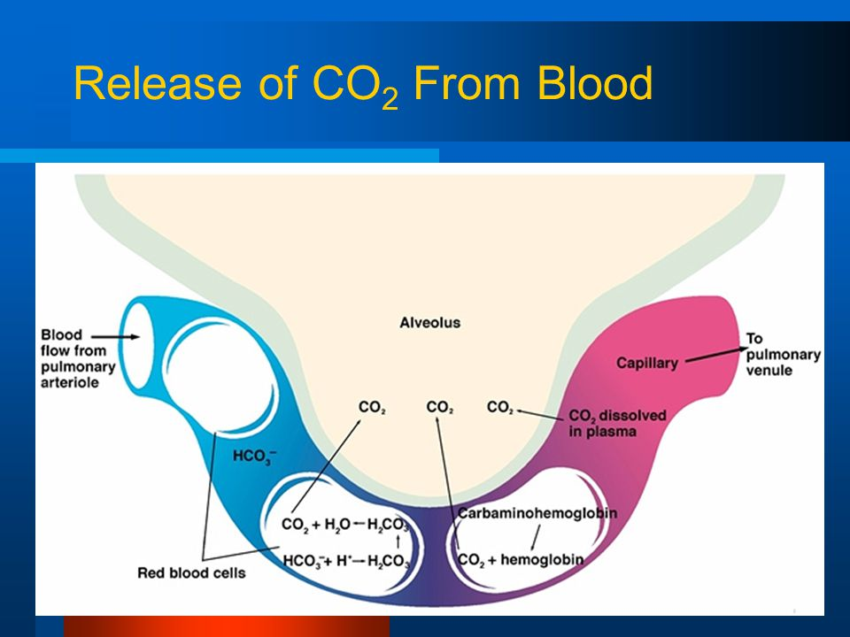Release of CO 2 From Blood