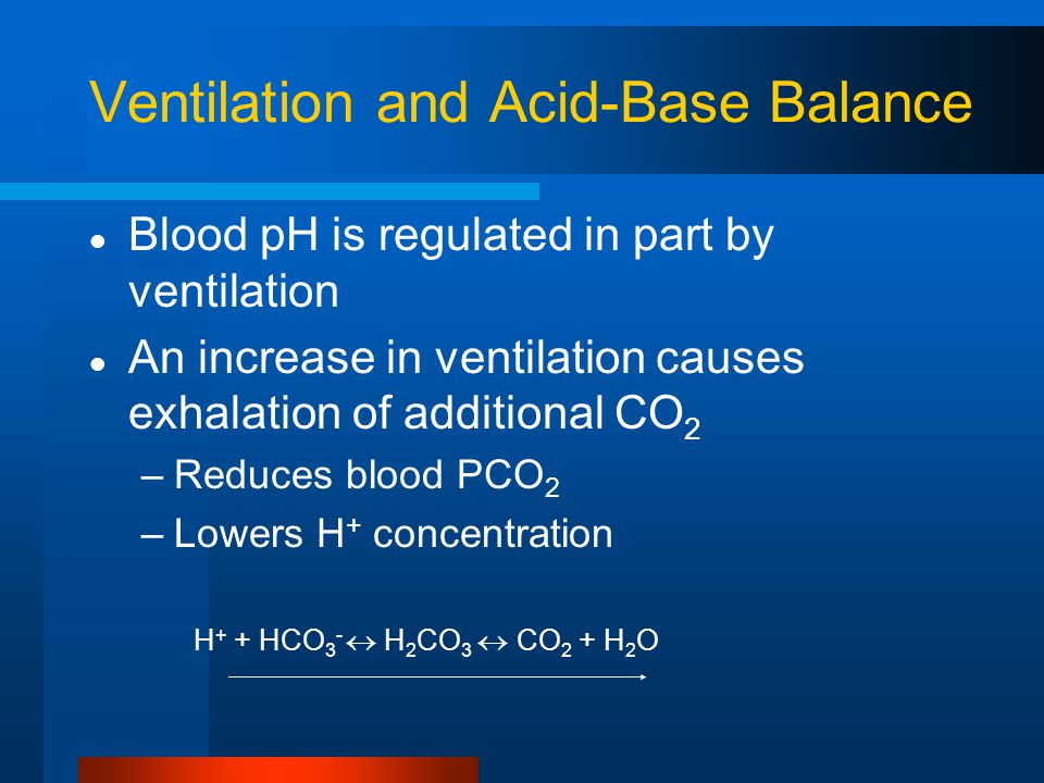 Ventilation and Acid-Base Balance Blood pH is regulated in part by ventilation An increase in ventilation causes exhalation of additional CO 2 –Reduces blood PCO 2 –Lowers H + concentration H + + HCO 3 -  H 2 CO 3  CO 2 + H 2 O
