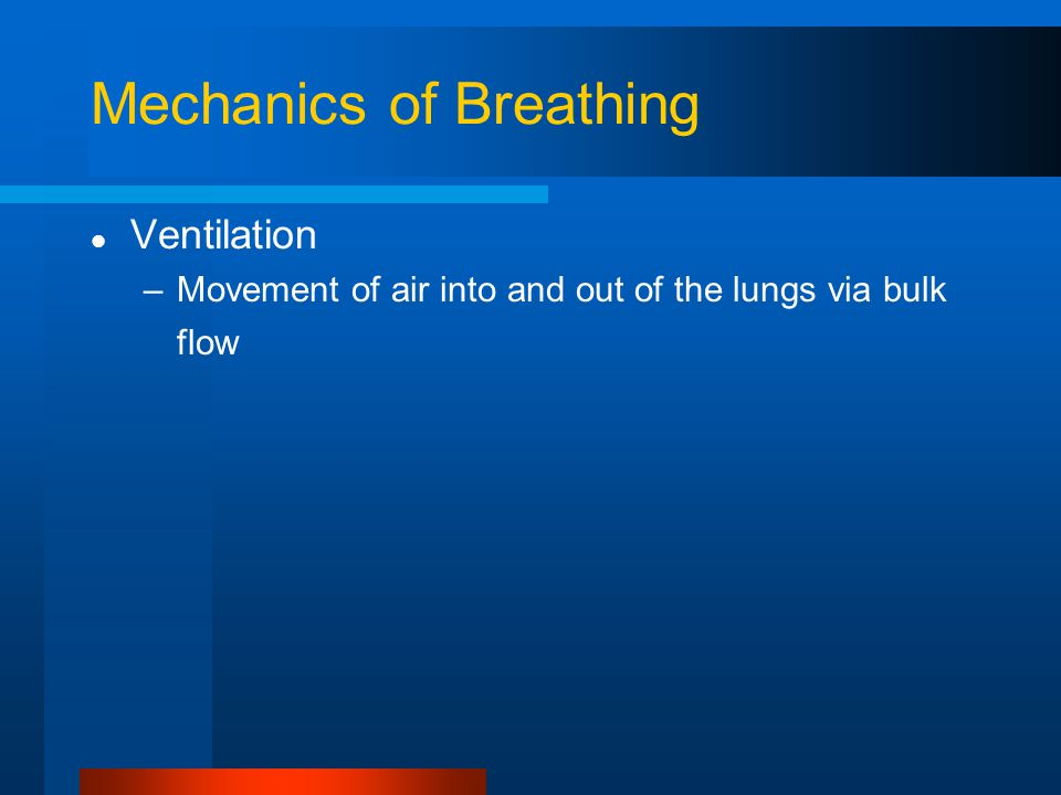 Mechanics of Breathing Ventilation –Movement of air into and out of the lungs via bulk flow