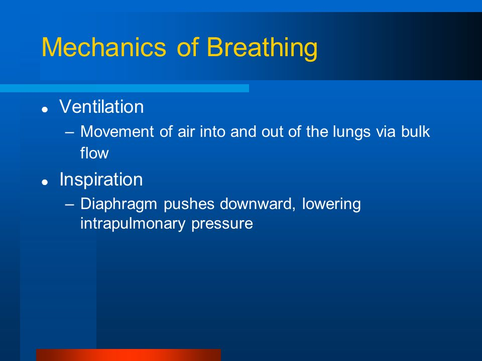 Mechanics of Breathing Ventilation –Movement of air into and out of the lungs via bulk flow Inspiration –Diaphragm pushes downward, lowering intrapulmonary pressure
