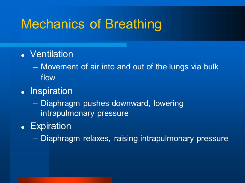 Mechanics of Breathing Ventilation –Movement of air into and out of the lungs via bulk flow Inspiration –Diaphragm pushes downward, lowering intrapulmonary pressure Expiration –Diaphragm relaxes, raising intrapulmonary pressure