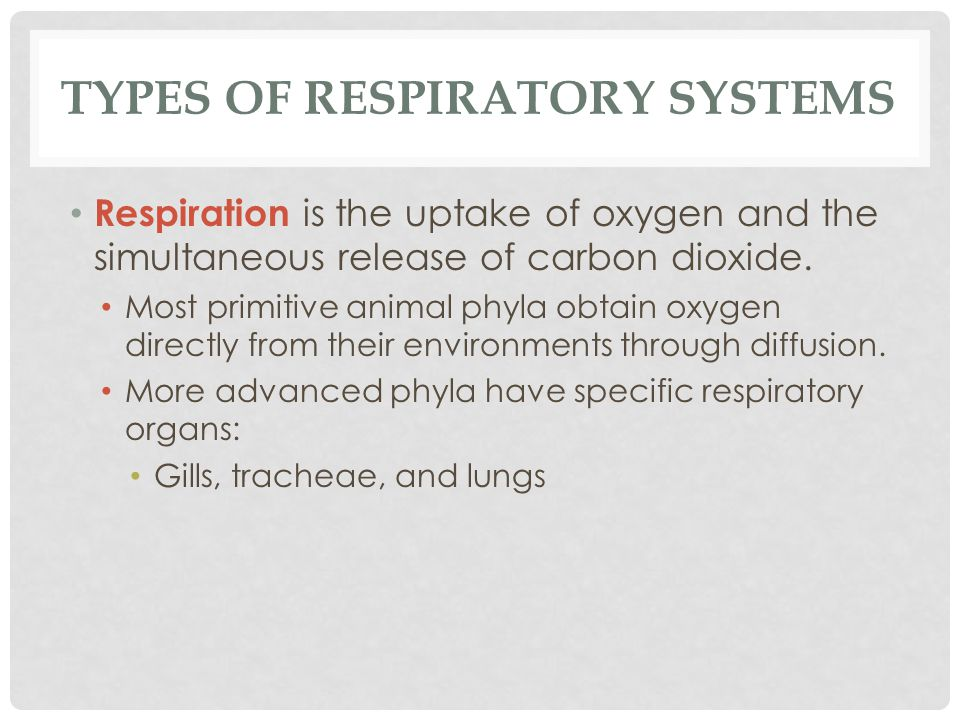 TYPES OF RESPIRATORY SYSTEMS Respiration is the uptake of oxygen and the simultaneous release of carbon dioxide. Most primitive animal phyla obtain ox