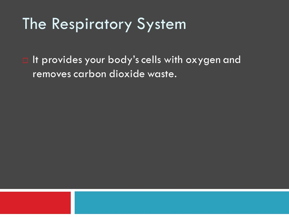 The Respiratory System  It provides your body's cells with oxygen and removes carbon dioxide waste.