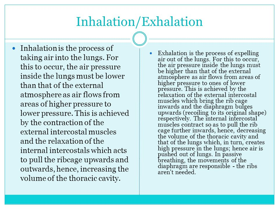 Inhalation is the process of taking air into the lungs.