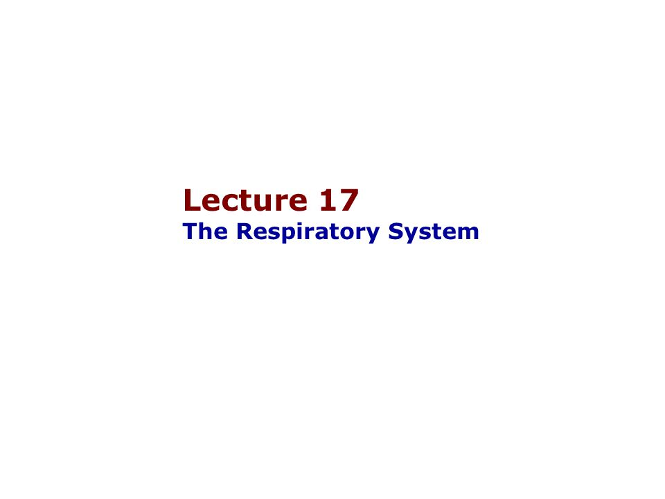 Lecture 17 The Respiratory System