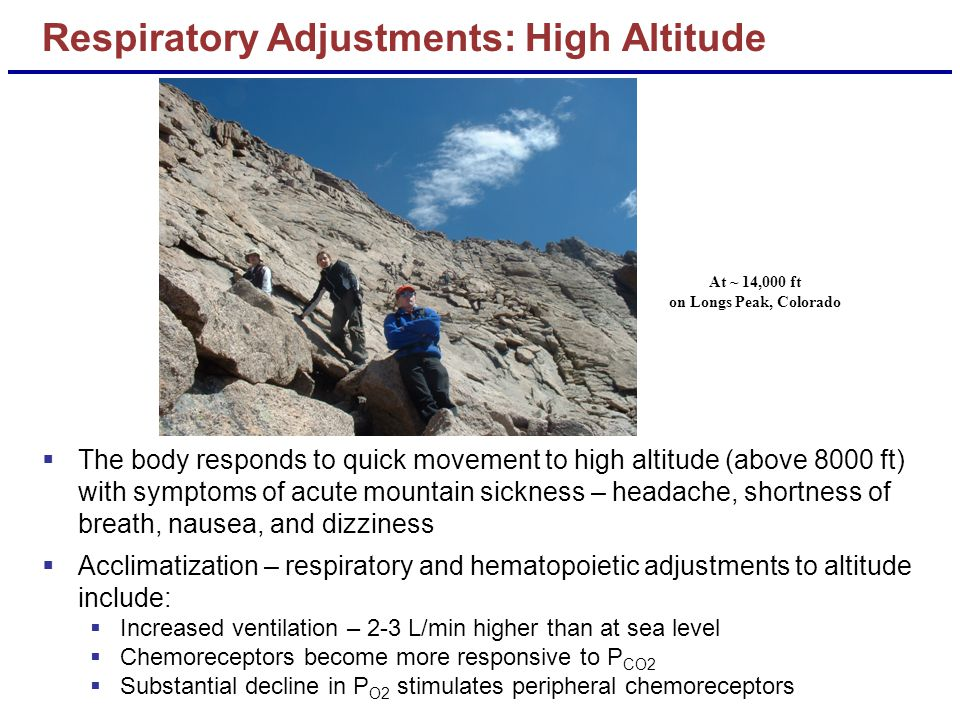  The body responds to quick movement to high altitude (above 8000 ft) with symptoms of acute mountain sickness – headache, shortness of breath, nause