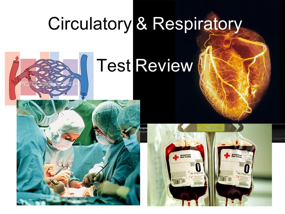 Circulatory & Respiratory Test Review
