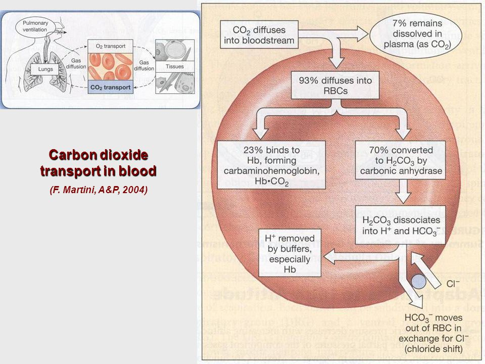 Carbon dioxide transport in blood (F. Martini, A&P, 2004)