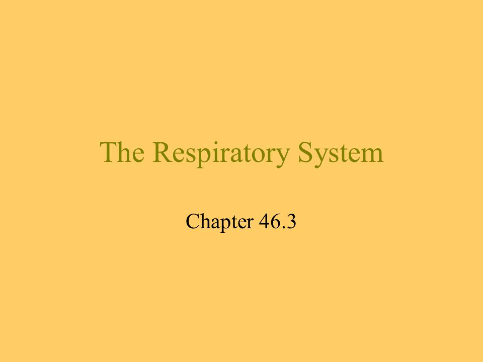 The Respiratory System Chapter 46.3