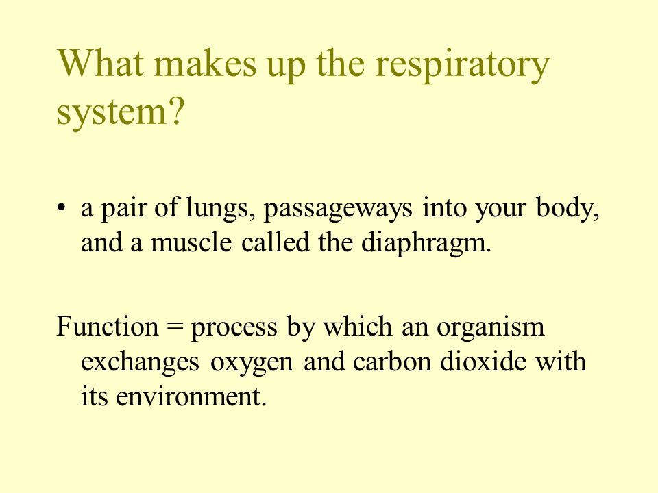 What makes up the respiratory system? a pair of lungs, passageways into your body, and a muscle called the diaphragm. Function = process by which an o