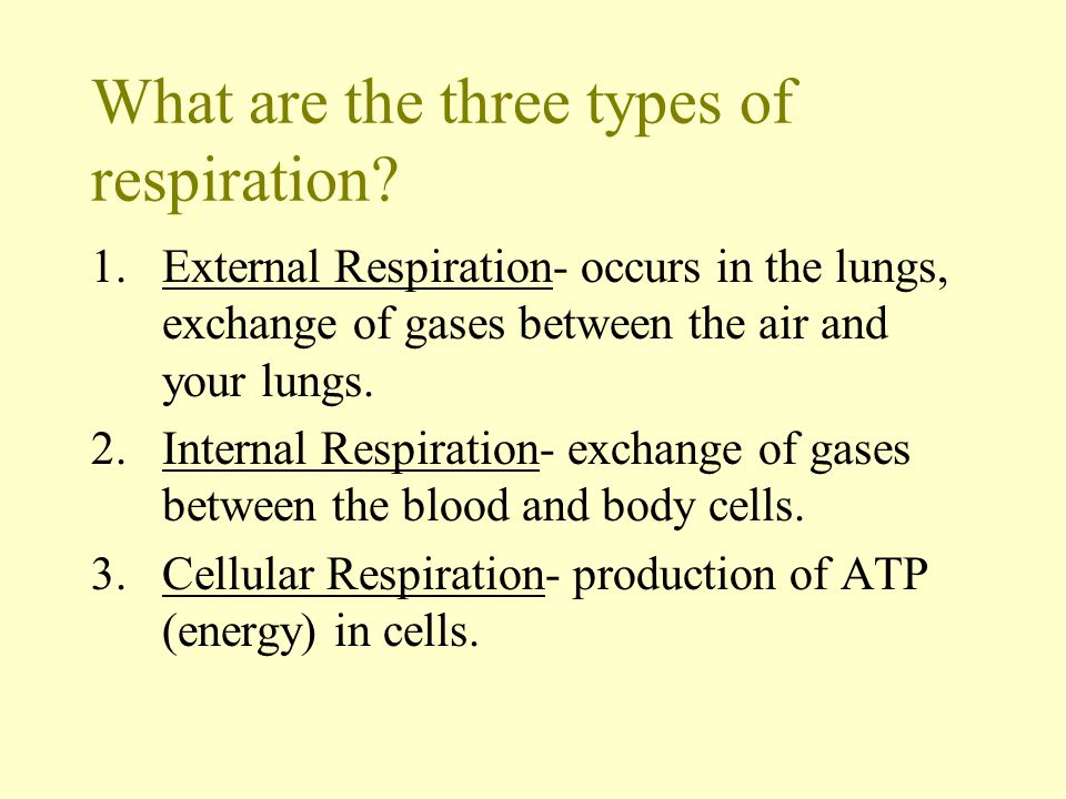 When you take a breath of air, what exactly are you breathing.