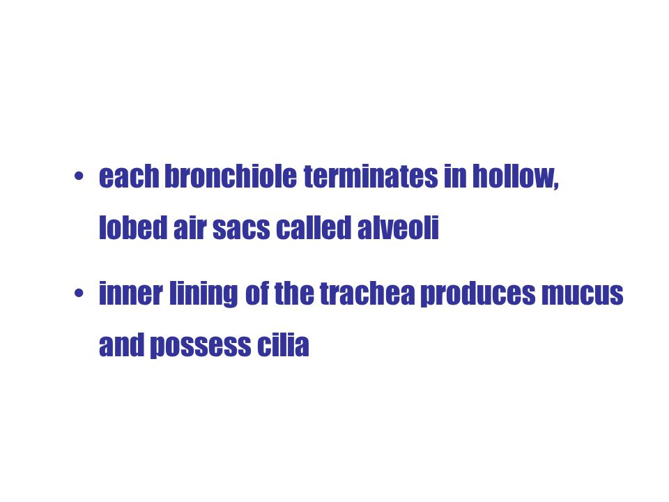 Trachea (Windpipe) and Bronchi trachea lies in front of oesophagus and extended into thoracic cavity at the lower end of trachea is divided into two b