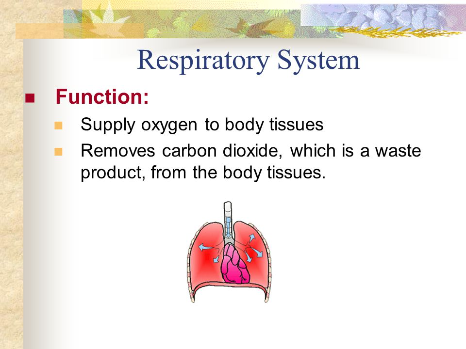 Respiratory System Function: Supply oxygen to body tissues Removes carbon dioxide, which is a waste product, from the body tissues.