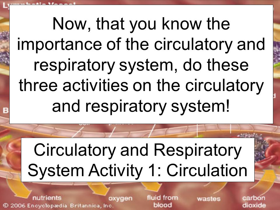 Circulatory and Respiratory System Activity 1: Circulation Now, that you know the importance of the circulatory and respiratory system, do these three activities on the circulatory and respiratory system!