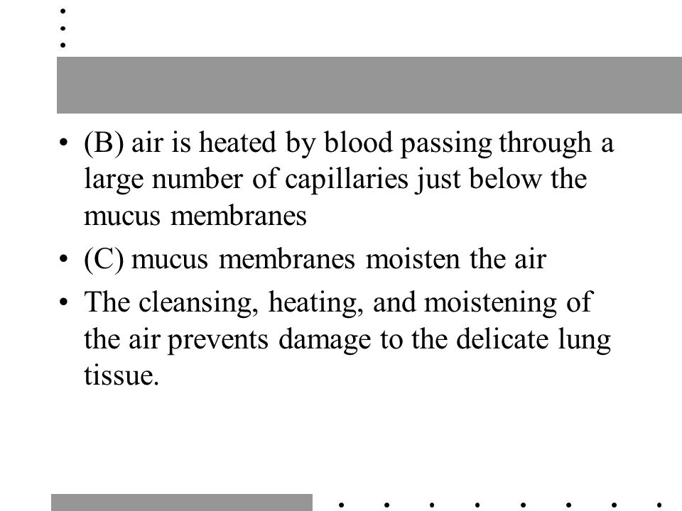 (B) air is heated by blood passing through a large number of capillaries just below the mucus membranes (C) mucus membranes moisten the air The cleansing, heating, and moistening of the air prevents damage to the delicate lung tissue.