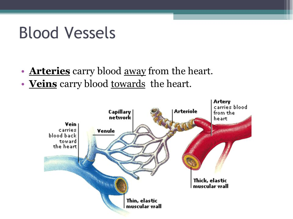 As your heart pumps blood through your body, you can feel a pulsing in some of the blood vessels close to the skin s surface, such as in your wrist, neck, or upper arm.